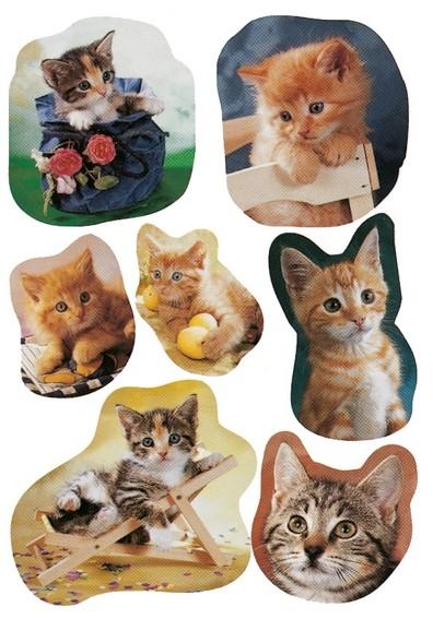 HERMA 5747 10x Sticker DECOR fotogene Kätzchen