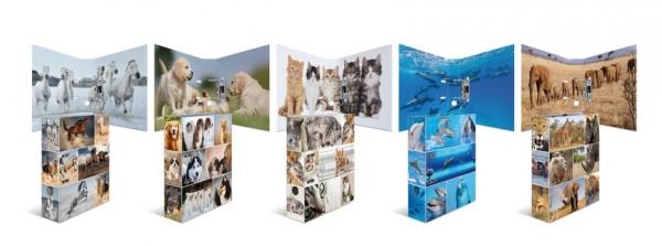 HERMA 7166 10x Motiv-Ordner A4 Animals - Katzen