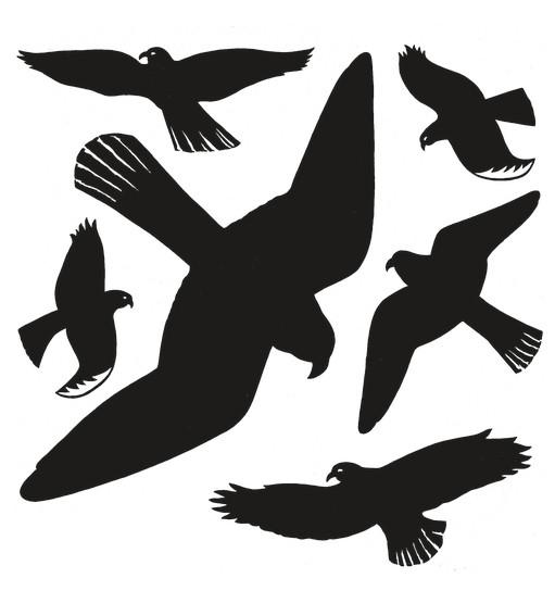 HERMA 5999 5x Fensterbilder Warnvögel 30x30 cm