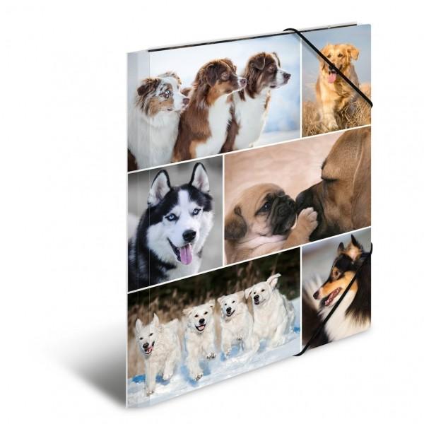 HERMA 19211 3x Sammelmappe A4 Karton Hunde