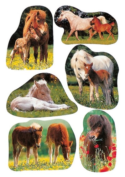 HERMA 5443 10x Sticker DECOR Pferdefotos